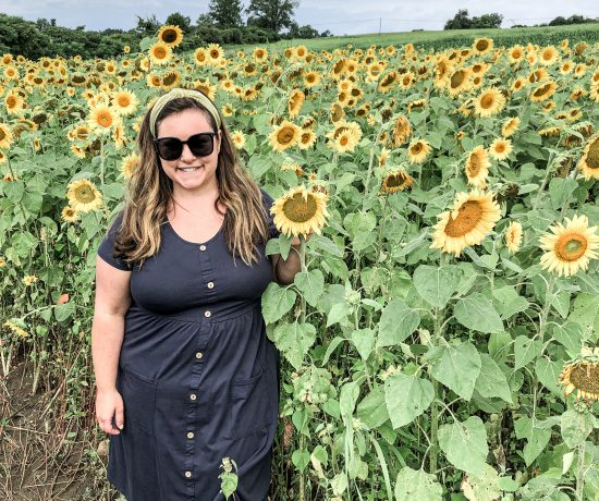 Where to see sunflowers in the Capital District