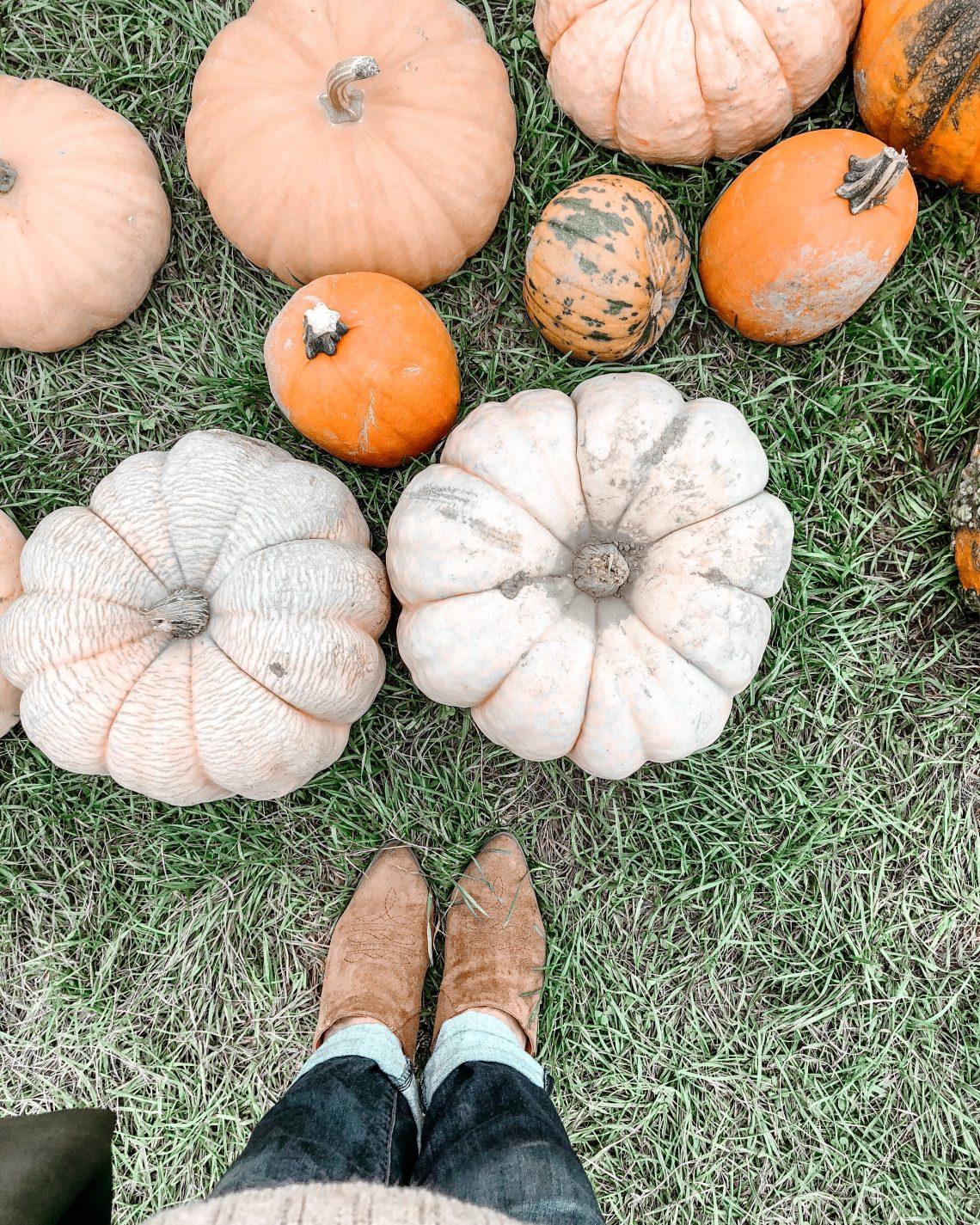 Best of fall DIYs, decor and recipes